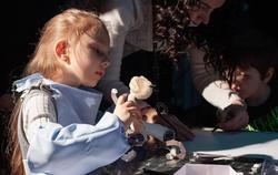 'Теремок' научит детей и родителей создавать кукольные спектакли