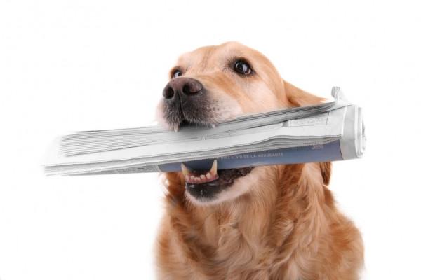 Российские гребцы завоевали первые олимпийские лицензии